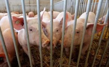 Việt Nam và nhiều nước khác nới lỏng lệnh cấm nhập khẩu thịt lợn Đức