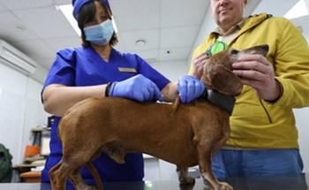 Nga đăng ký vắc-xin Covid-19 cho động vật đầu tiên trên thế giới