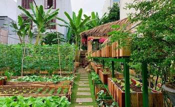 Mảnh đất đầy rác biến thành vườn rau xanh mướt