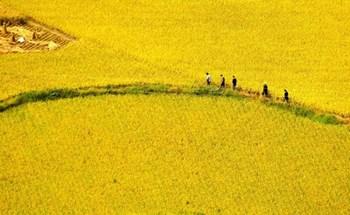 TQ: Hơn 35 tỷ kg ngũ cốc không ăn mà mất
