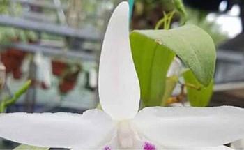 Cơn sốt lan đột biến tiền tỷ tràn về vựa hoa Đông La