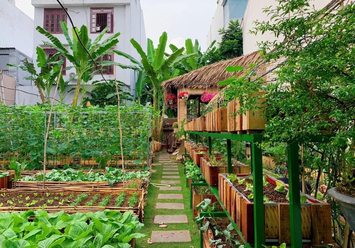 Mảnh đất đầy rác biến thành vườn rau xanh mướt - Ảnh 1