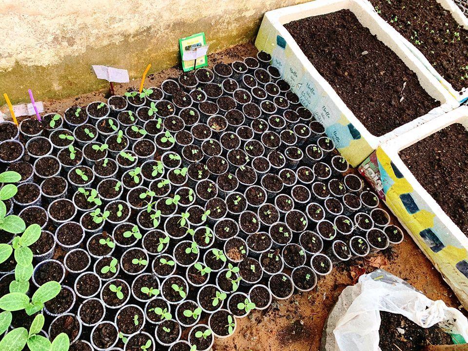 Mảnh đất đầy rác biến thành vườn rau xanh mướt - Ảnh 3