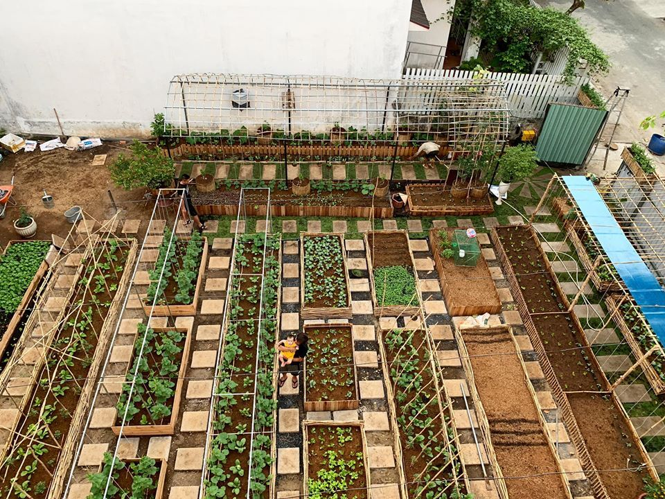 Mảnh đất đầy rác biến thành vườn rau xanh mướt - Ảnh 4