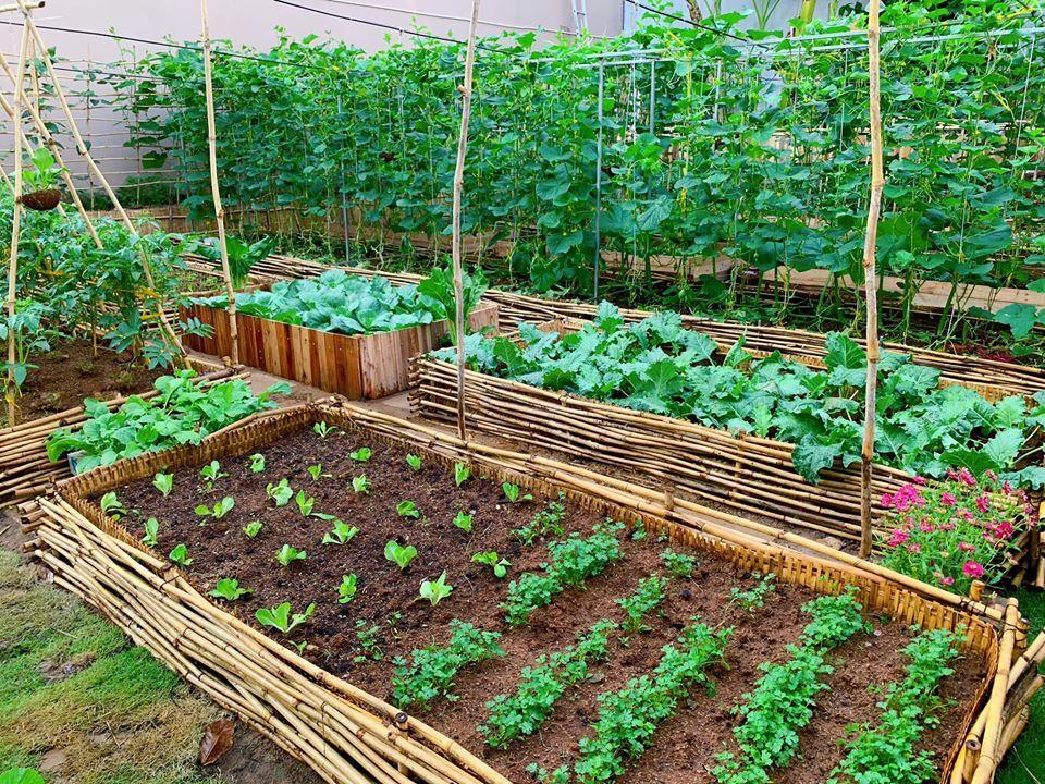 Mảnh đất đầy rác biến thành vườn rau xanh mướt - Ảnh 5