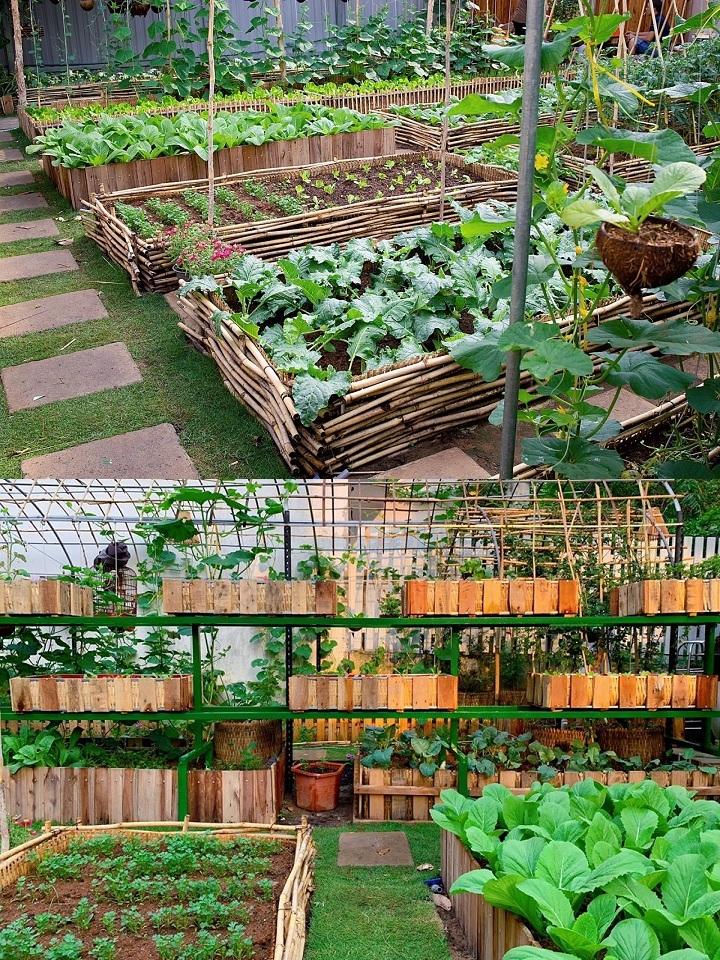 Mảnh đất đầy rác biến thành vườn rau xanh mướt - Ảnh 6
