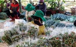 Hàng chục triệu cành hoa Tết Đoan Ngọ ở Đà Lạt 'tắc' đầu ra