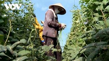 Phân bón tăng giá doanh nghiệp lẫn nông dân cùng gặp khó