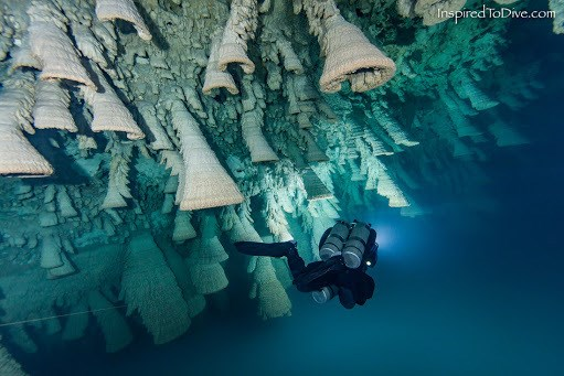 Chuông Địa Ngục tập trung ở khoảng giữa hố sụt, tính từ mặt nước đến đáy. Ảnh:Inspired To Dive